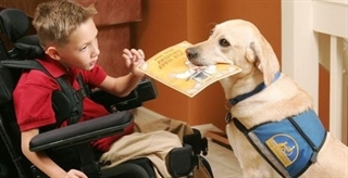 Kid Playing With Service Dog