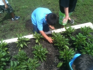 A young child helps with a community garden.