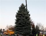 Candidates for the 2015 City/County Christmas Tree
