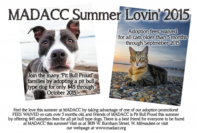 Summer Loving Adoption At MADDACC